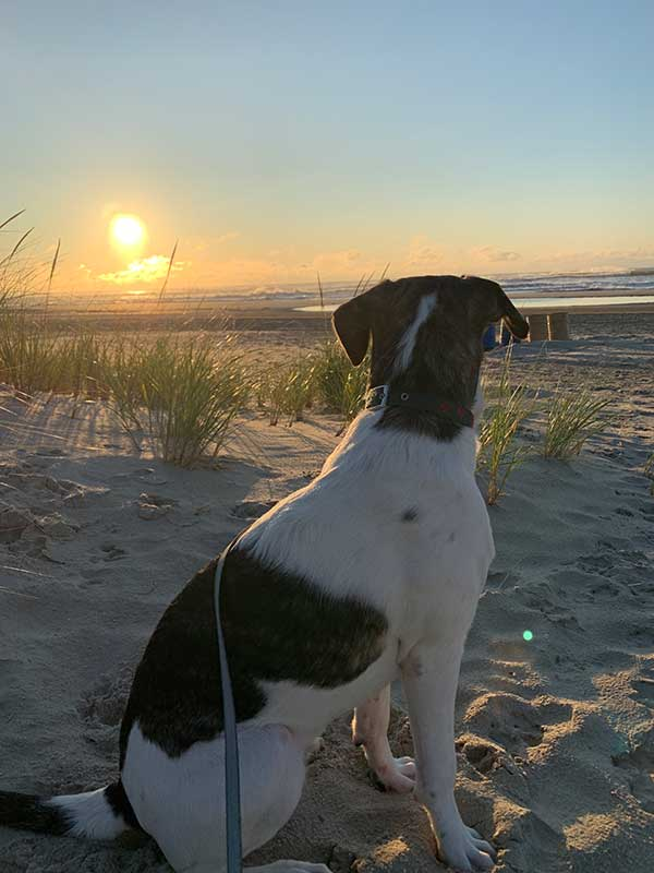 dog looking at a sunset
