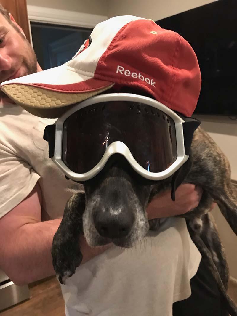 working dog flash
