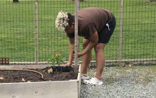 planting marigolds