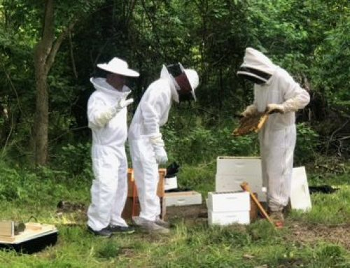 Manor of Hope Adds Beehives to the Campus